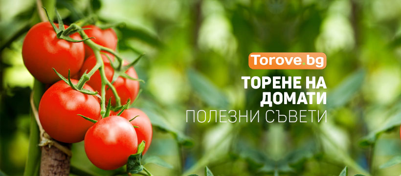 Торене на домати - Накратко - Най-важните съвети.